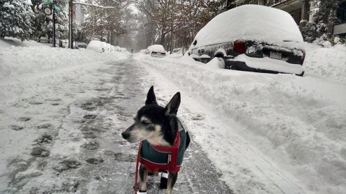Zeke's first winter
